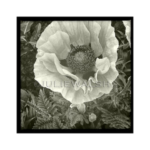 Poppy Photo Panel-Photo-WorkShopGallery