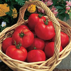 "Tomato Slicer/Sauce 15"" Patio Pot - Multiple Varieties"