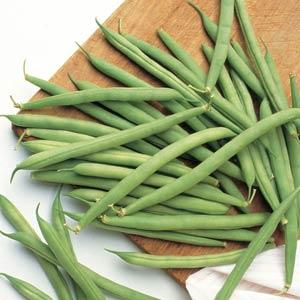 Beans - Blue Lake Bush