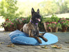 Poochie Pool & Deck Lounger — Medium