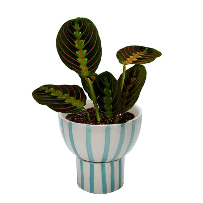 Green Striped Planter Pot ( 2 piece ) - Perilla Home