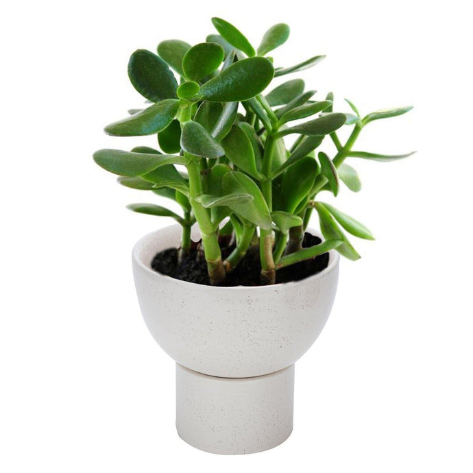 Off White Planter Pot ( 2 piece ) - Perilla Home