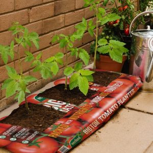 Westland Big Tom Tomato Planter - 50Ltr