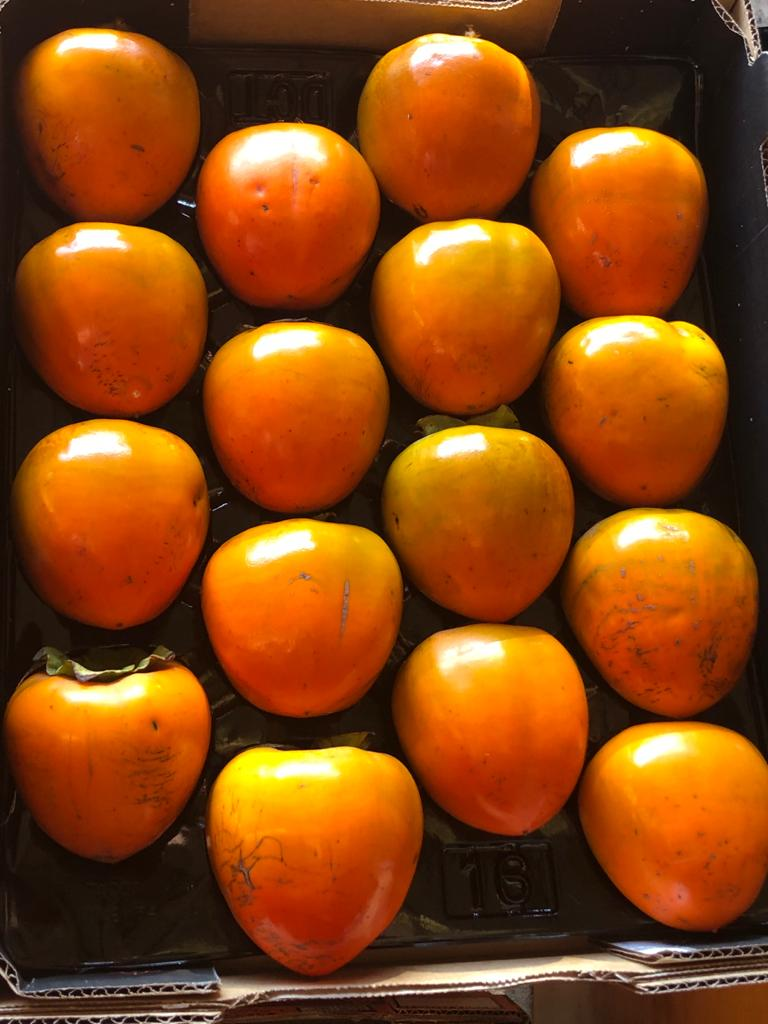 Nightingale Persimmons