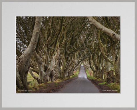 PRM Mounted Photo Print-The Dark Hedges NI