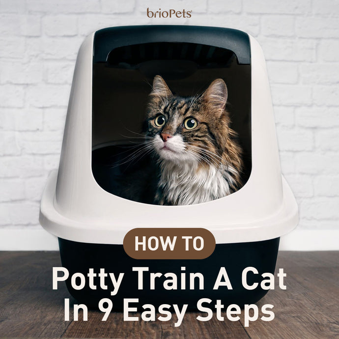How To Potty Train A Cat In 9 Easy Steps