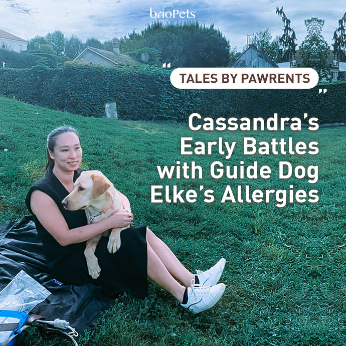 Tales by Pawrents #1: Cassandra's Early Battles with Guide Dog Elke's Allergies