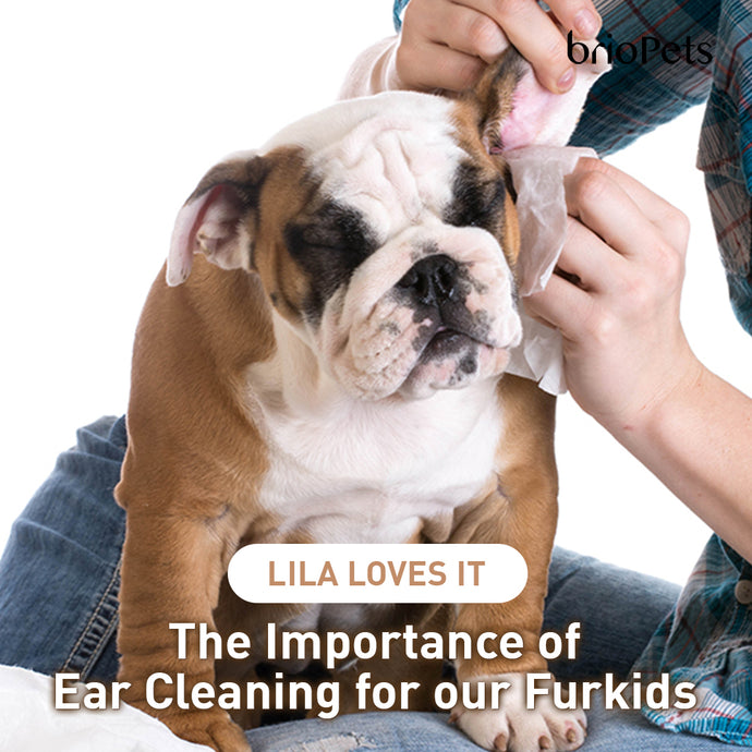 The Importance of Ear Cleaning for our Furkids