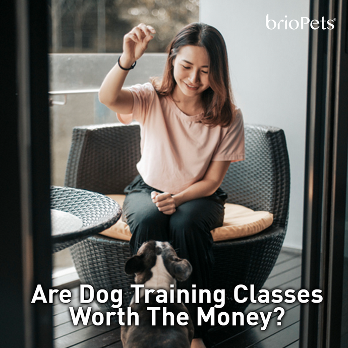 Are Dog Training Classes Worth the Money?
