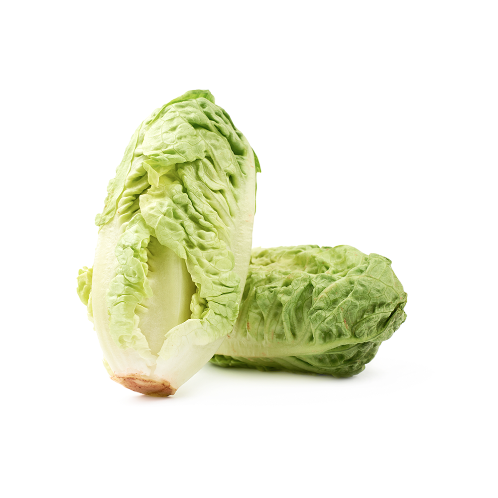 Lettuce | Baby Gem | Pack of 2