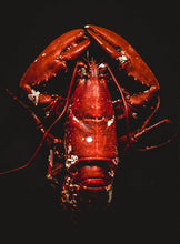 Load image into Gallery viewer, Fresh Local Lobster