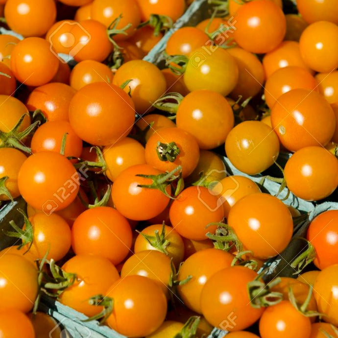 Cherry Tomatoes, Sungolds