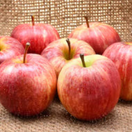 Apples - Local