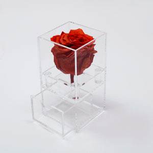 1 Single Rose with Drawer Preserved
