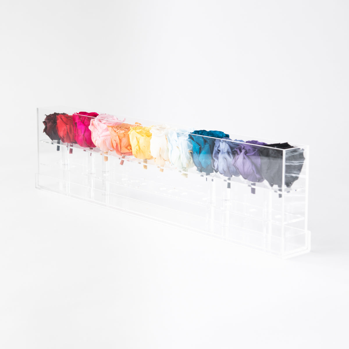 12 Rosebox Rainbow Preserved