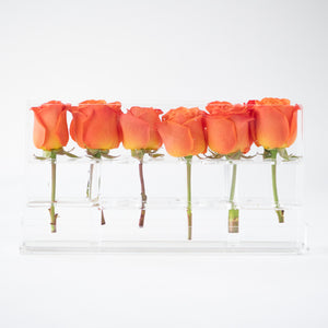 6 Roses Single