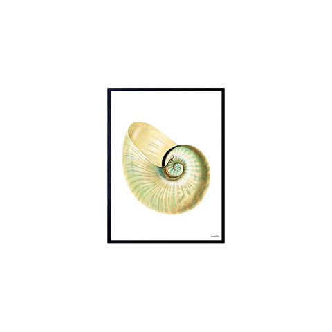Poster Yellow Conch 30X40