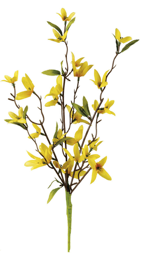 NEW Pick - Forsythia - 102617