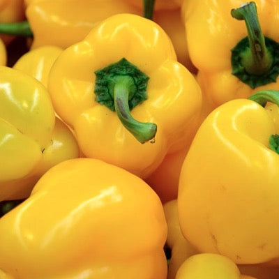 Capsicum Yellow box