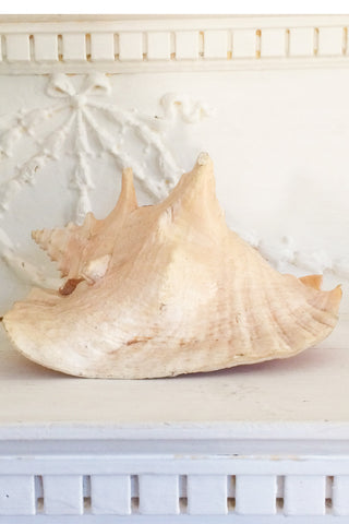 Sea Shell Lamps (set of 2)