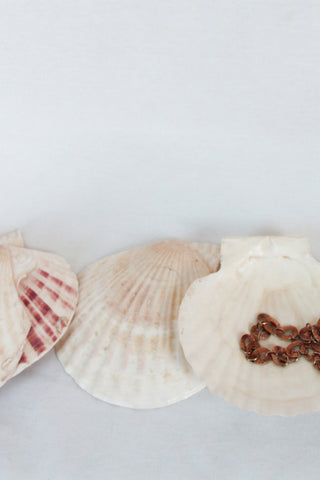 Boca Grande Shell Trays