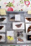Butterfly Boxes: Collection of 13