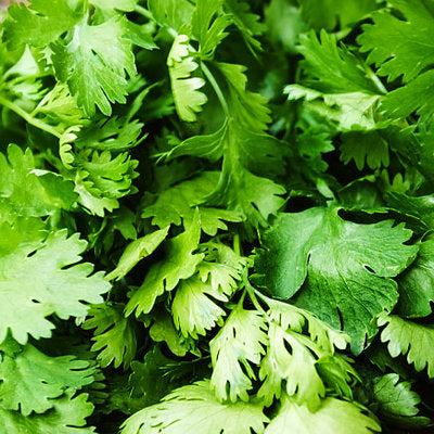 Herb, Fresh Cilantro - 1 bunch ITEM 6339