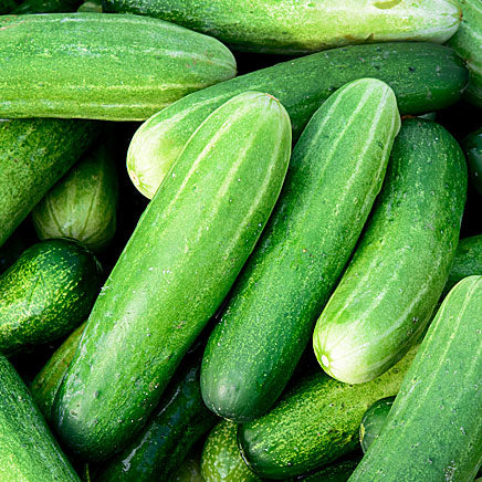 Cucumbers - 3 count ITEM 204