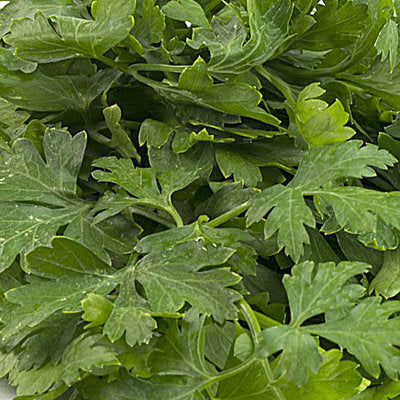 Herb, Parsley, Italian flat leaf - 1 bunch ITEM 6337
