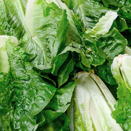 Lettuce, Romaine - 1 head ITEM 5853