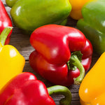 Peppers, Bell, Mixed - 6 count ITEM 5864