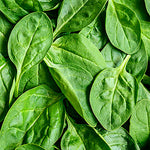Spinach, Baby - 2 lb. bag ITEM 5878