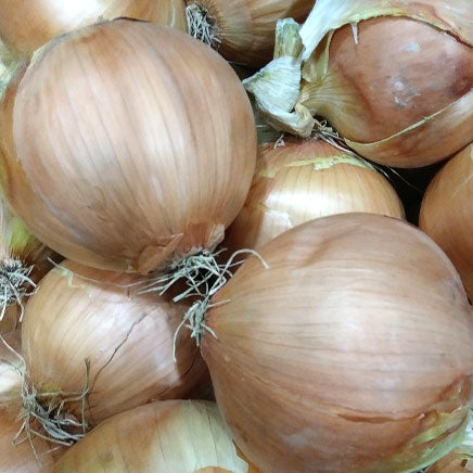 Onion, Sweet Vidalia - 2 count ITEM 6379