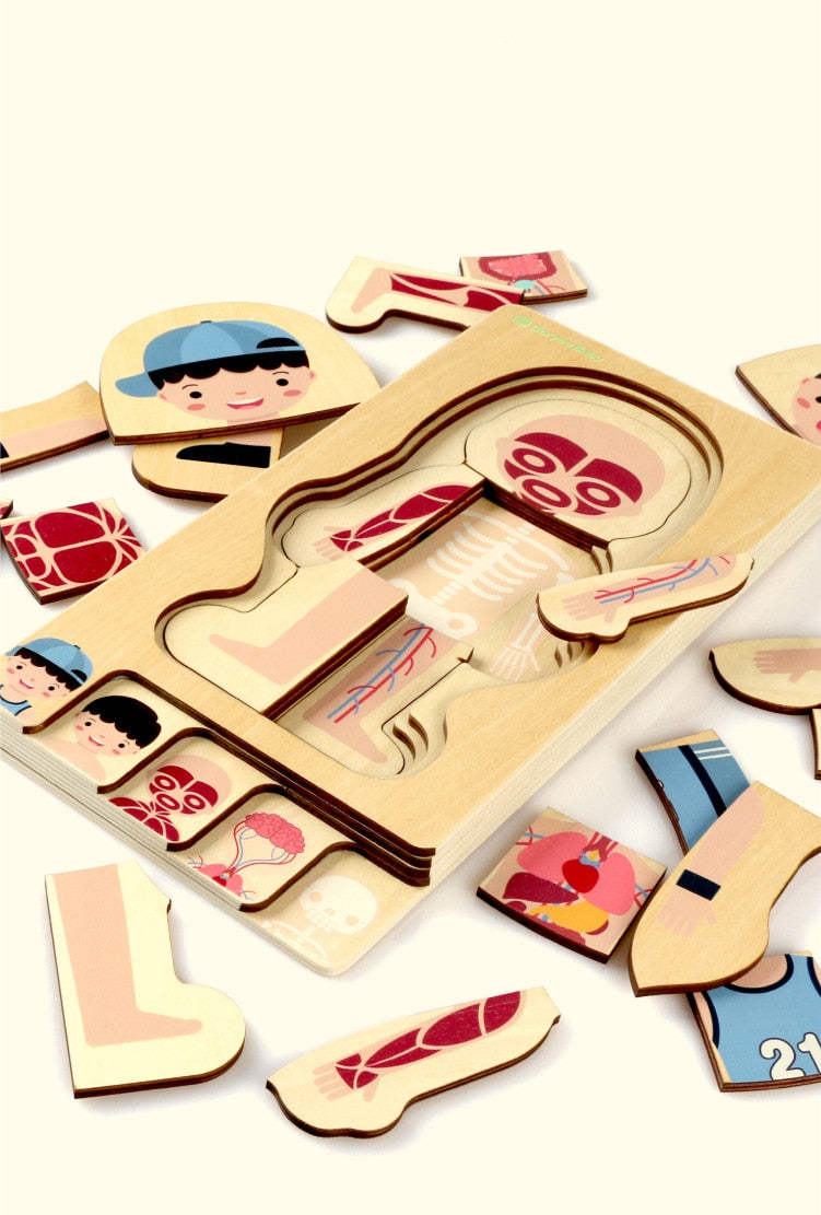 Montessori Educational Anatomy teaching aid puzzle