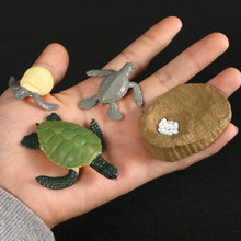 Load image into Gallery viewer, Animals Growth Cycle educational figurines