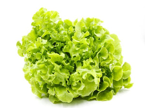 Oak Lettuce Green