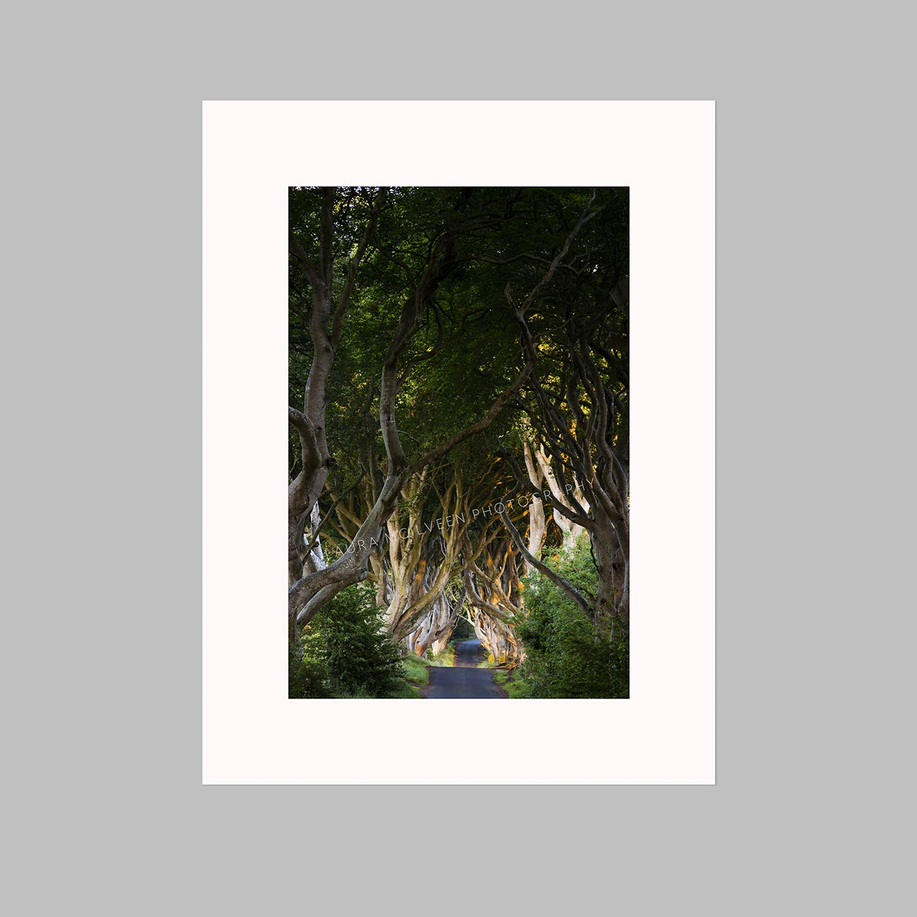 'Joy' - The Dark Hedges, Ballymoney