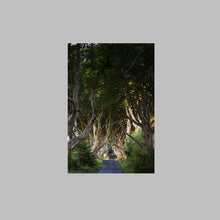 Load image into Gallery viewer, 'Joy' - The Dark Hedges, Ballymoney