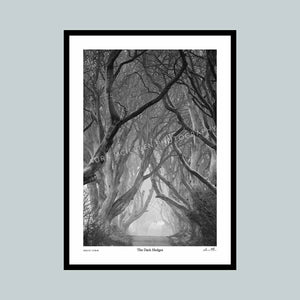 The Dark Hedges - The Timed Collection
