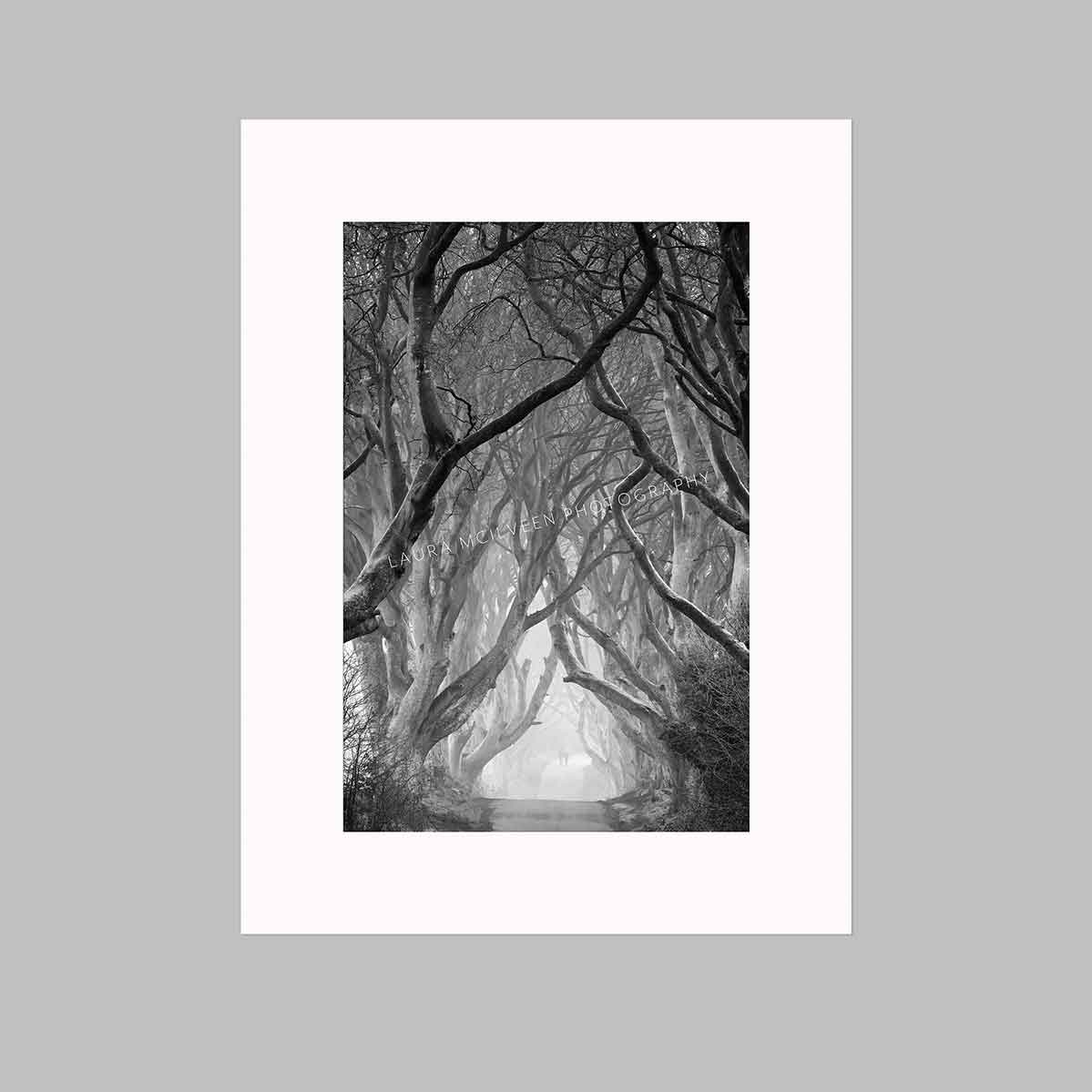 'Walking' - The Dark Hedges