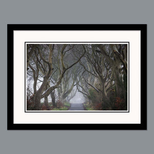 'Into the fog' - The Dark Hedges