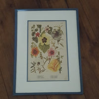 Vintage - Floral Cornflower Blue Frame Wall Art