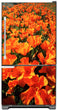 Load image into Gallery viewer, Orange Poppies Magnet Skin on Model Type Bottom Freezer Refrigerator