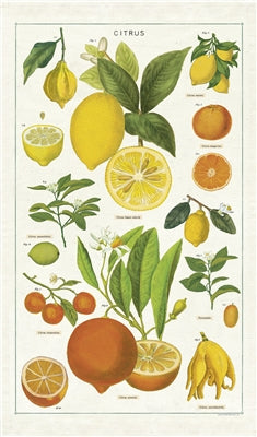 Vintage Images of citrus fruit printed on 100% cotton tea towels add a pop of color and brightness to any kitchen design.