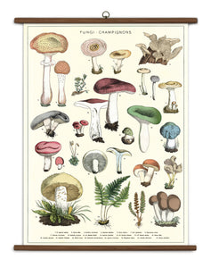 Vintage Mushrooms Chart