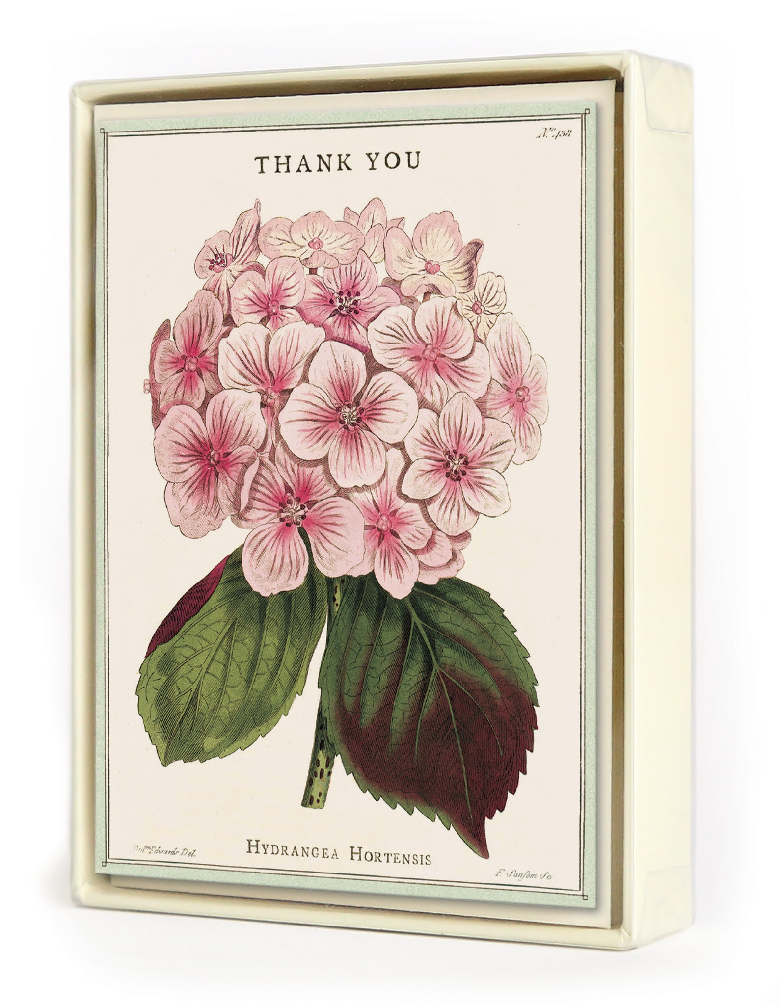Hydrangea Thank You Boxed Set of Notecards