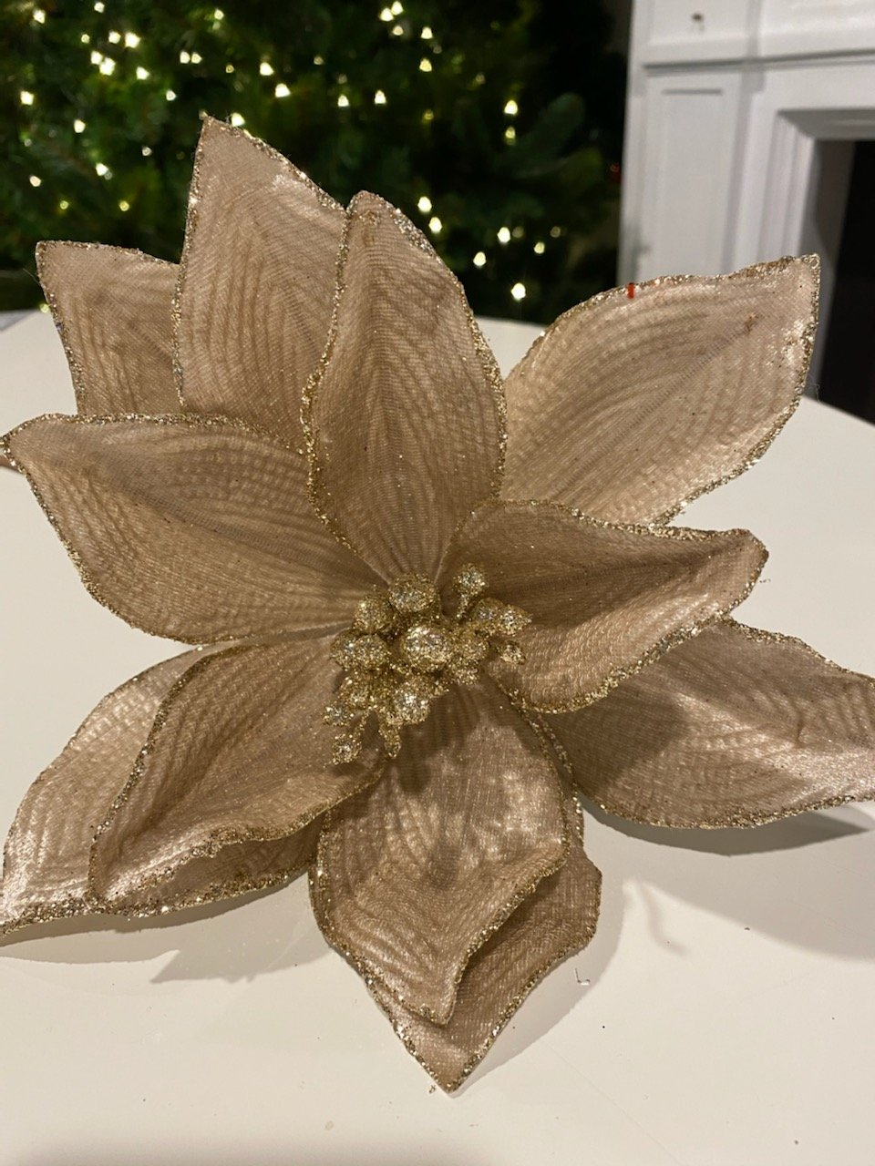 Champagne Poinsettia - My Christmas