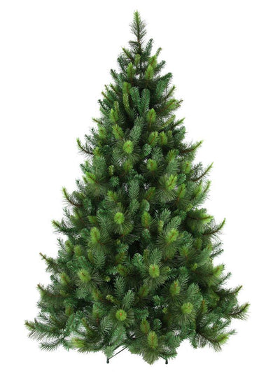 Ponderosa Pine Christmas Tree - My Christmas