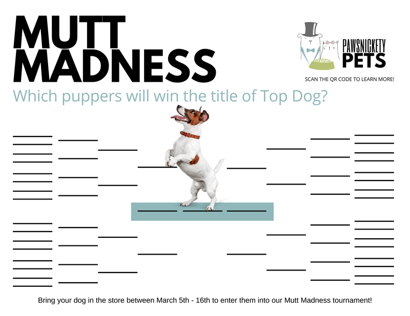 Mutt Madness Round 1 Voting is LIVE