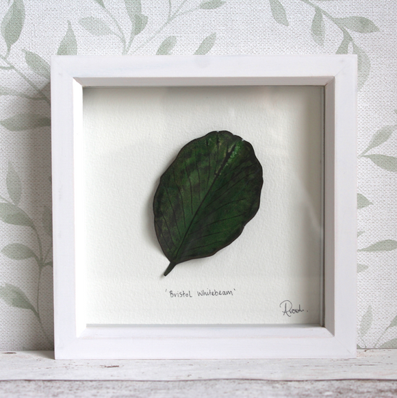 Bristol Whitebeam - Medium Frame